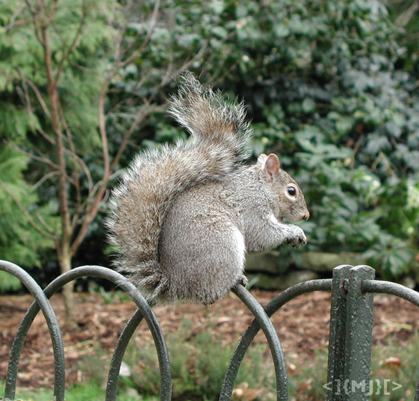 http://www.m8j.net/data/List/Photos-117/squirrel2.jpg